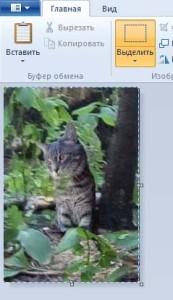 Снимок кота